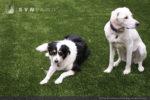 artificial-pets-dog-grass-1