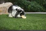 artificial-pets-dog-grass-10