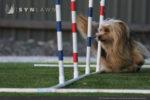 artificial-pets-dog-grass-2