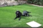 artificial-pets-dog-grass-3