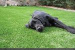 artificial-pets-dog-grass-4