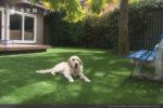 artificial-pets-dog-grass-5