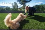 artificial-pets-dog-grass-6