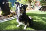 artificial-pets-dog-grass-7
