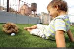 artificial-pets-dog-grass-8