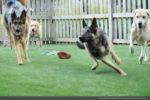 artificial-pets-dog-grass-9